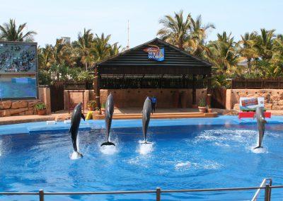ushaka-dolphin-show